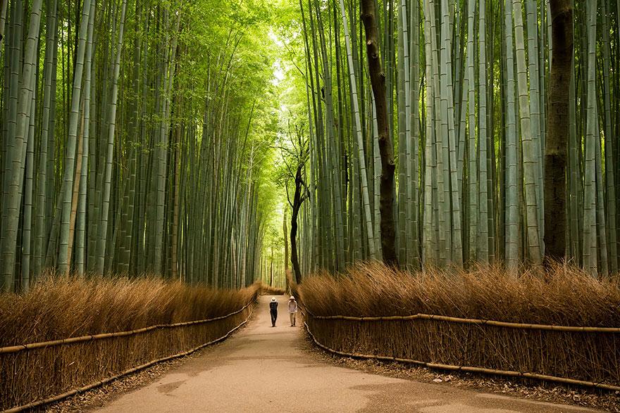 Sagano bambuszerdő, Arashiyama