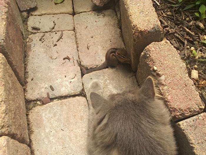 cat-chipmunk-friends-sleeping-1
