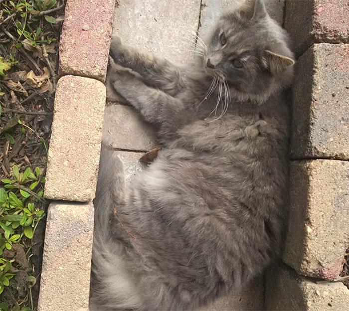 cat-chipmunk-friends-sleeping-11