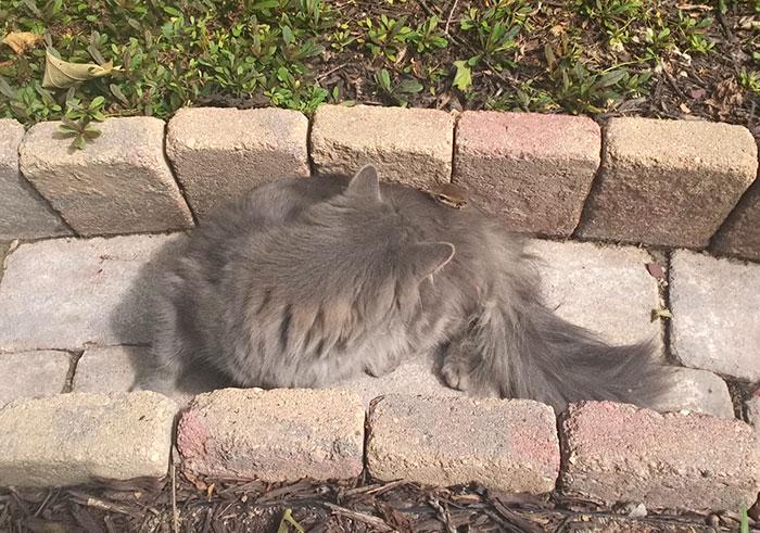 cat-chipmunk-friends-sleeping-4