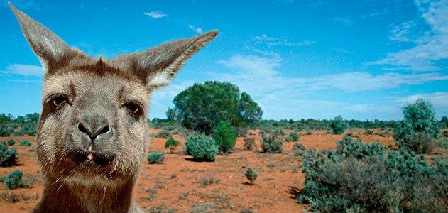 evotourism-Kangaroo-Island-Australia-631.jpg__800x600_q85_crop