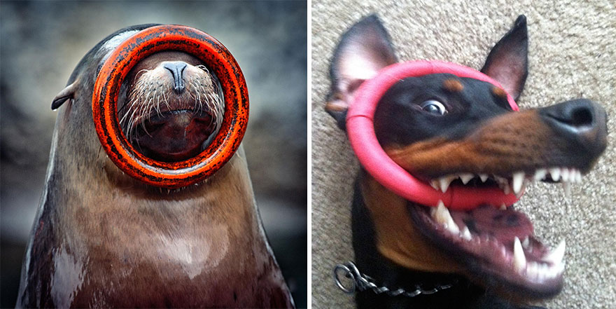 funny-seals-look-like-dogs-111-574d93def1da3__880