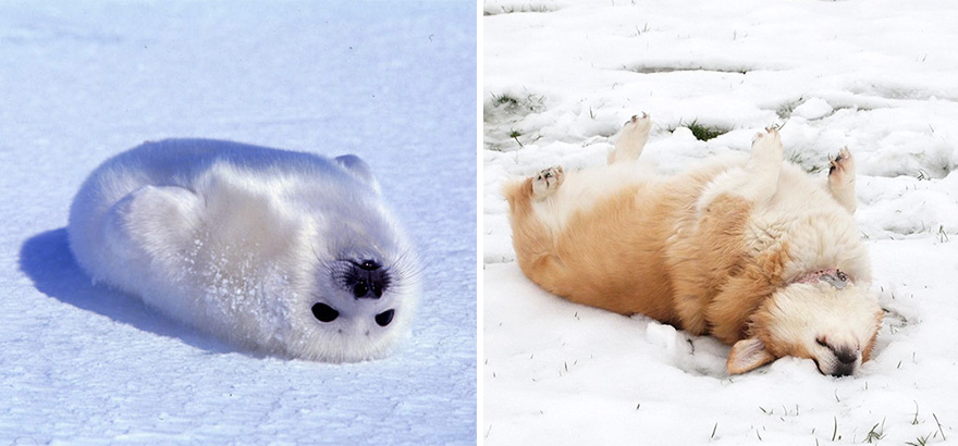 funny-seals-look-like-dogs-12-574d73c3b177e__880
