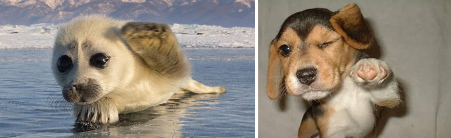 funny-seals-look-like-dogs-17-574d97c87c87d__880