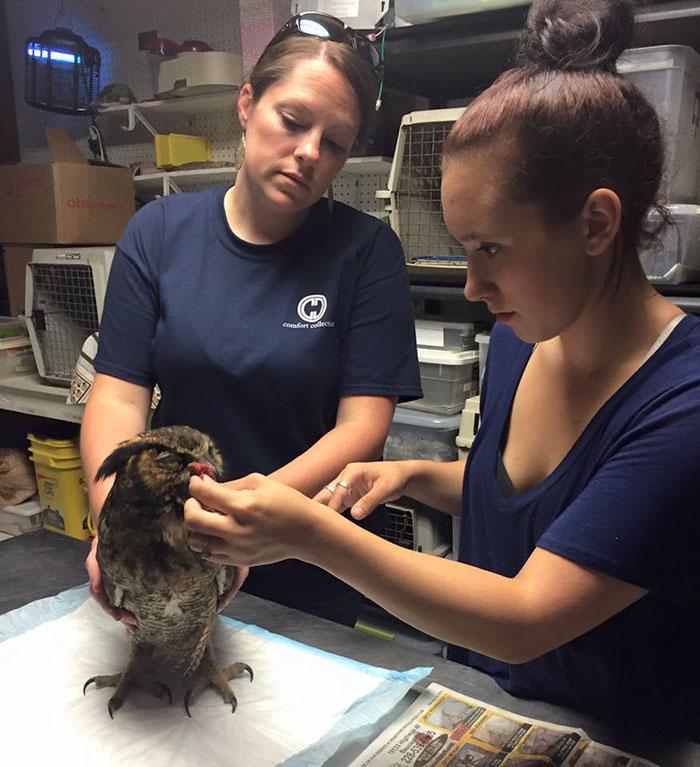 rescue-owl-hugs-man-gigi-douglas-pojeky-2