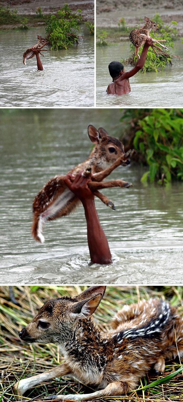 Hős kisfiú egy őzikéért kockáztatta életét a megáradt folyóban.
