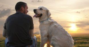 Labrador-man-dogs-best-friend