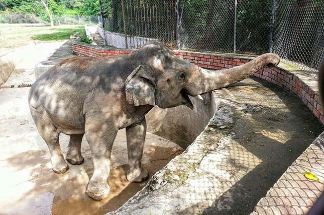 elefant-6