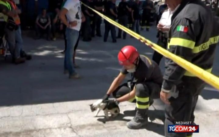 107116216_Video_of_cat_rescued_from_quake_after_five_days_FOREIGN-large_trans++2PgEBqFn936A7tElAgW_rsFhSQ4Ibi207ilDyrBQoLg