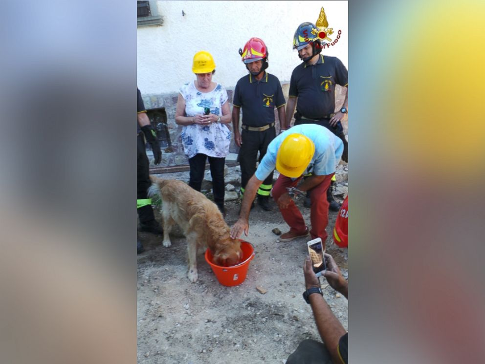 HT_italy_quake_dog_rescue_1_jt_160902_v4x3_4x3_992