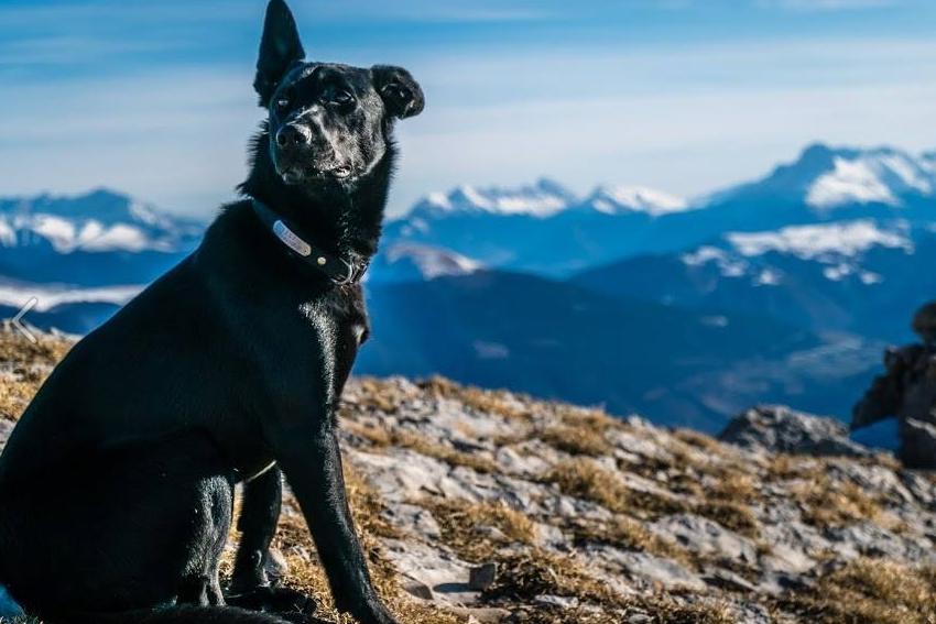 kutya-vadasz-foto