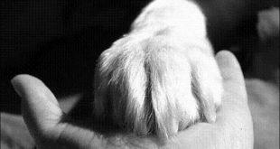 kutyamancs