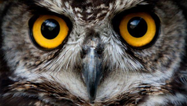 night-owl.jpg.653x0_q80_crop-smart