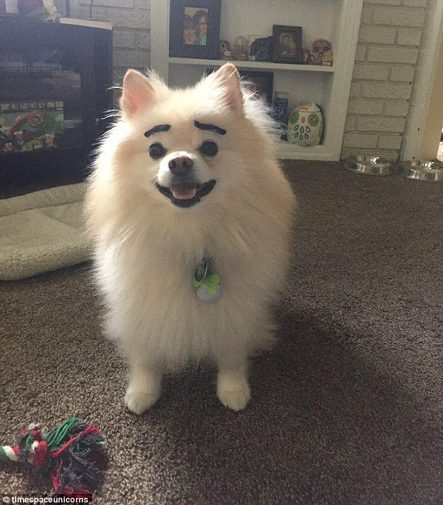 kutyaszemöldök11