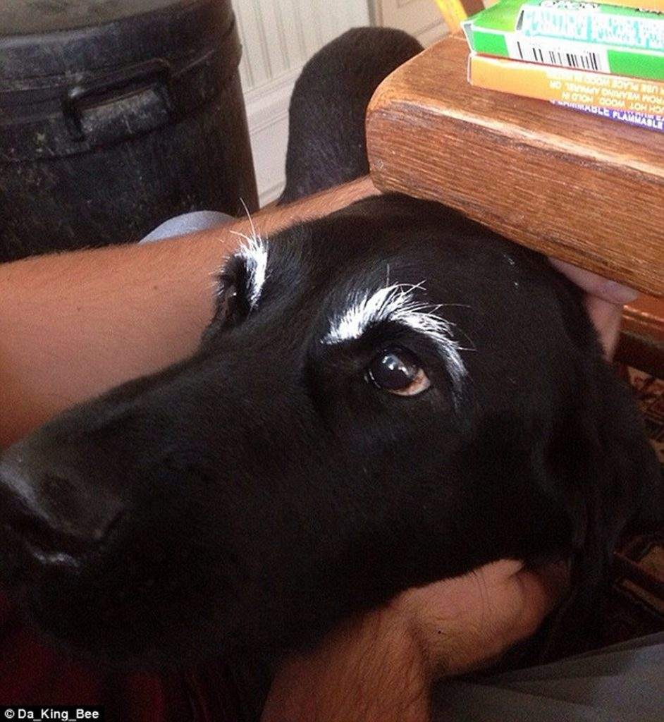 kutyaszemöldök13